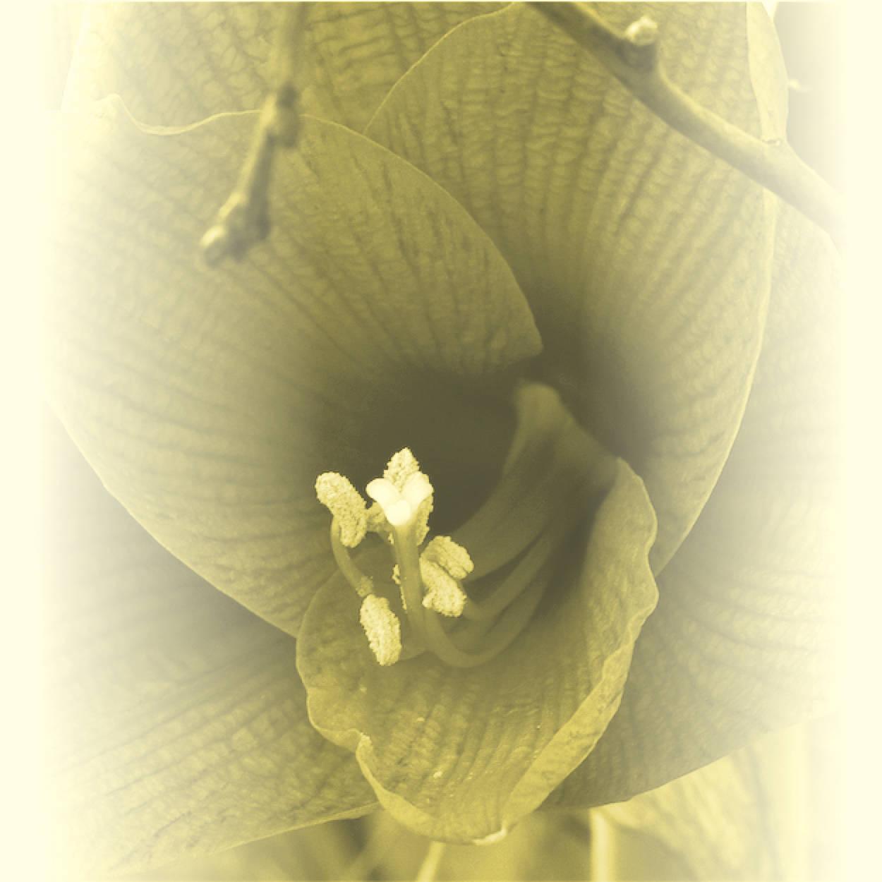 bloem-geel